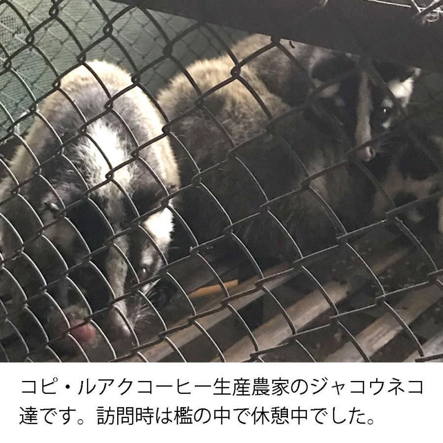 100% コピ・ルアク  ドリップコーヒー お試しパック [ 1袋10g入り×2袋 ] メール便 送料無料|zakka-hana87-y|03