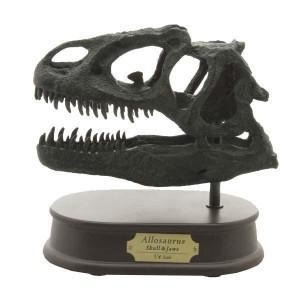 恐竜のフィギュア 模型 インテリア 玩具 アロサウルス スカル FD654(70357)