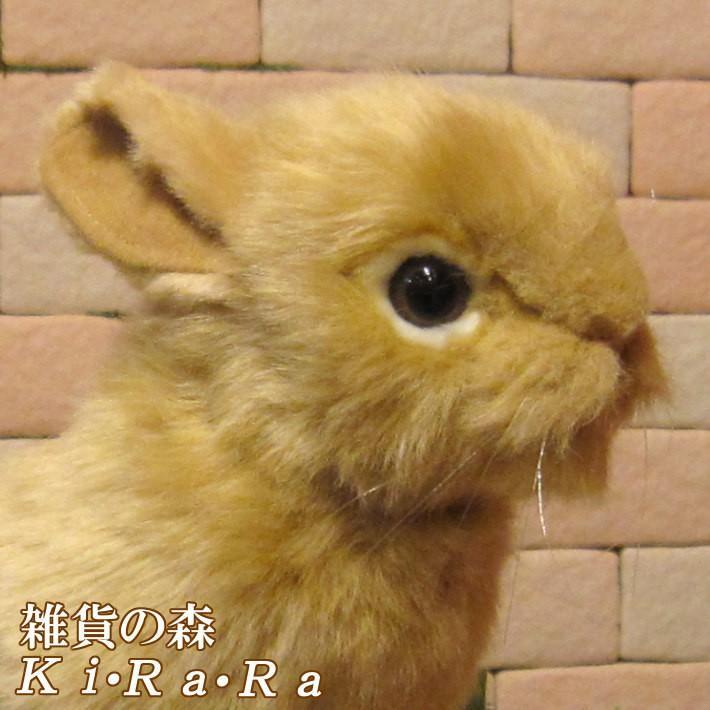 ドワーフ ウサギ