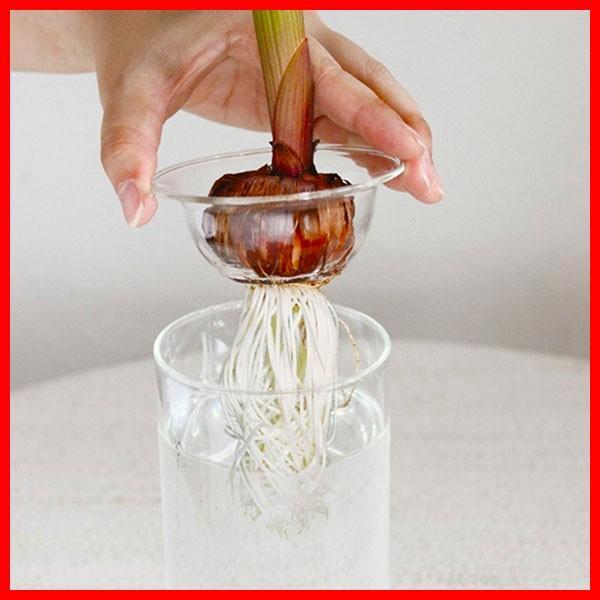 BULB VASE ショート&ロング セット 球根 水栽培 ガラス容器 花瓶 ガラスケース 鉢 フラワーベース おしゃれ|zakkayafree|02