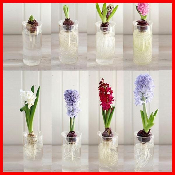 BULB VASE ショート&ロング セット 球根 水栽培 ガラス容器 花瓶 ガラスケース 鉢 フラワーベース おしゃれ|zakkayafree|04