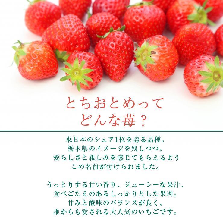 お歳暮 アイス ギフト 栃木県産 とちおとめ苺アイス 6個 アイスクリーム いちご イチゴ 御歳暮 zenzaemon 04