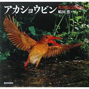 アカショウビン―火の鳥に出会った (日本の野鳥) 中古 古本 zerothree