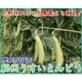 和歌山産 うすいえんどう(実えんどう) 約1kg入 Lサイズ 産地直送 紀州うすい S10