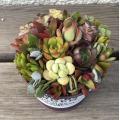 多肉は形と色味を重視して集合し、 陶器の花器、 とてもおしゃれでゴージャスです。 自分にはもちろん、...