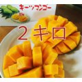マンゴー 沖縄産 キーツマンゴー 約2キロ 残暑見舞  数量限定 全国送料無料