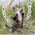 毎日クーポン有/ おどるネコうたうネコ/沖昌之