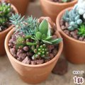 メーカー:■神田直接 メーカー品番: _interior _gardening ガーデニング サボテ...