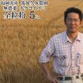 全粒粉 チクゴイズミ 5Kg   無農薬 中力粉 福岡県産 筑後久保農園