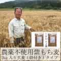 もち麦 お徳用パック 業務用 国産 農薬不使用 栄養価最高峰の殻付き紫もち麦品種