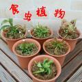 食虫植物 捕食パター...
