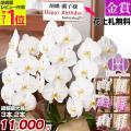 金賞受賞農園から贈る胡蝶蘭! お祝の花 ギフトに人気の胡蝶蘭 各種お祝いに対応できます。 開店祝い、...