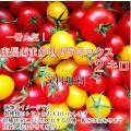 ミニトマト トマト 当店一番人気!数種類のトマトが入った店長おまかせバラミックス2キロ