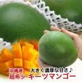キーツマンゴー 沖縄 マンゴー 大玉 沖縄マンゴー 600g〜800g