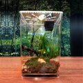 爬虫類 ケージ 水槽 トカゲ カメレオン