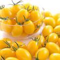 野菜の種/種子 イエローアイコ・ミニトマト 1000粒(メール便発送/大袋)サカタのタネ 種苗