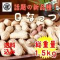 さや煎り落花生 Qなっつ 1.5kg (500g×3袋) 令和2年産 新豆 千葉県産