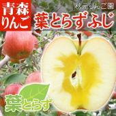 青森県産りんご【葉とらずふじ(はとらずふじ)】 収穫まで葉を摘まないふじ。 着色ムラがありますが蜜も...