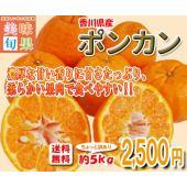 ■約5kg 訳あり品/サイズ混合  香川県産なのに南国を思わせるような濃厚な香り。みかんより甘みが強...