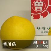 ■約1.5kg 1玉入り  香川県のオリジナル品種の文旦「サラダポメロ」。県内の限られた生産者しか栽...