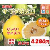 ■約6kg 6-10玉前後  香川県のオリジナル品種の文旦「サラダポメロ」。県内の限られた生産者しか...