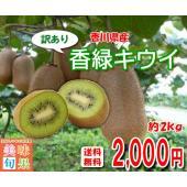 ■約2kg入り(バラ詰め)  香川県オリジナルキウイフルーツ「香緑」。国内で最も多く栽培されるキウイ...