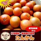 ◆地球畑のたんかん◆  ポンカンとスイートオレンジの自然交雑で生まれた品種。 「桶に入れて売られてい...