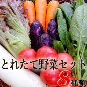 【名称】「とれたて野菜」セット 【内容量】8種類詰め合わせ ※「その時いちばん良いもの」をお選びしま...