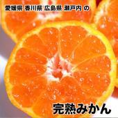 香川県産完熟みかん 約10Kg箱 Mサイズ