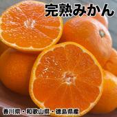 香川県産完熟みかん サイズ指定不可 約10Kg