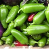 メキシコ料理には欠かせない中辛のとうがらし。サラダやソース、ディプスやピクルスに利用します。一般的な...