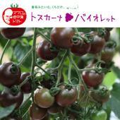シシリアンルージュを生み出したトマトの天才ブリーダー、マウロの傑作地中海トマトシリーズ。トスカーナバ...