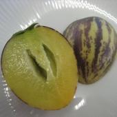 そのまま食べられる高級トロピカルフルーツを育ててみませんか?ペピーノは、メロンや洋梨に似た味がする珍...