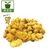 鮮やかな色が特徴の黄金ショウガの苗です。大ブームのショウガの中でも最も人気の高い品種です。香りや辛み...