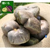 東南アジア原産のサトイモ科の植物です。別名「エアーポテト」。うまく育てると赤ちゃんの頭くらいの巨大な...
