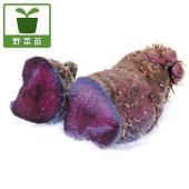 アントシアニン、ポリフェノールが豊富な、東南アジア原産のやまいもです。熱を加えても色は鮮やかです。紫...