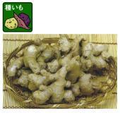 金時生姜の種ショウガです。金時生姜はさわやかな香りと清涼感のある辛味が特徴です。魚や肉の臭み消し、め...