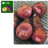 さといも(里芋)は家庭菜園で手軽に作れる野菜です。病気も少なく、たくさん収穫できます。セレベスはイン...