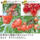 世界初の感動が味わえるトマト。まるでサクランボみたい。「極うす皮」皮が薄く、良く伸縮するためほとんど...