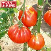ズッカはゼリー質が少ない分厚い果肉で酸味はほとんどなく、あっさりとしたうまみのサラダトマトです。生の...