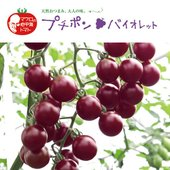 プチポンロッソに続くプチポン(ポンポン食べやすい。)シリーズのトマトです。プチポンバイオレットは糖度...