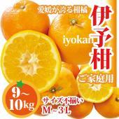 伊予柑は愛媛を代表する柑橘の一つです。  皮を剥いた瞬間に広がる みずみずしい香り、ジューシーな果肉...