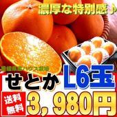 愛媛県のせとかが今年も旬を迎えます♪  せとかは清見オレンジとアンコールオレンジに交配させたものを更...
