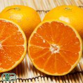 【佐賀県産の健康早生ミカン】 10月頃までは生育上緑色の物も含みます。化学合成された農薬や肥料を使わ...