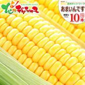 ■商品名:南幌町明るい農村ネットワーク生産  北海道産 あまいんです(黄色系/トウモロコシ) ■商品...