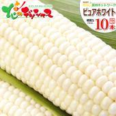 ■商品名:南幌町明るい農村ネットワーク生産  北海道産 ピュアホワイト(白系/トウモロコシ) ■商品...
