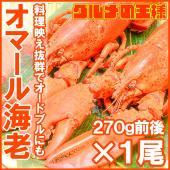 オマール海老ロブスター(冷凍重量270g×1尾) 肉厚なボイルロブスターが大特価 ・ロブスター オマ...