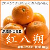 はっさくは上品な甘さと食感で今なお支持者が多い柑橘です。果汁は柑橘類の中ではやや少なめで、プリプリと...
