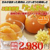 ■この商品の特徴  漢字で書くと桶柑と書く中国原産の柑橘。 外側の皮はやや分厚く剥きにくいですが、み...