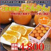 ■この商品の特徴  漢字で書くと桶柑と書く中国原産の柑橘。  外側の皮はやや分厚く剥きにくいですが、...